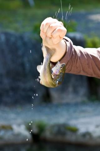 テンカラ釣りとフライフィッシングの違いって?