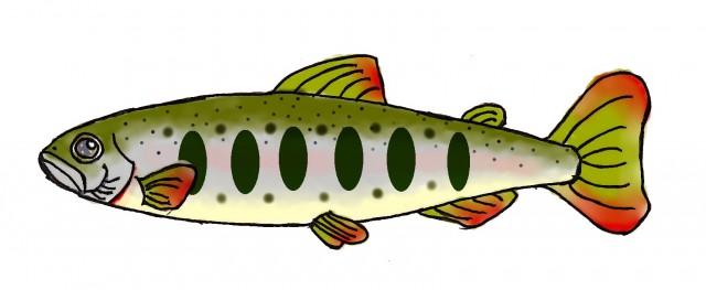 魚の体の仕組みと機能とは?