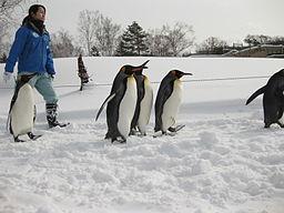 旭山動物園の冬期営業と時間の目安はこれ!