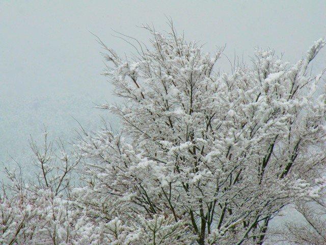 フライフィッシングと伊勢正三そしてなごり雪
