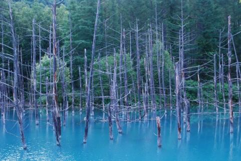 青い池が北海道の美瑛で冬の夜に光り出す!