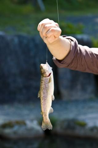 魚には痛みが感じない痛みがないと思われていたが実は!