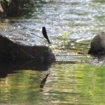 北海道でヤマメ釣り6月1日に解禁になる場所はここだ!