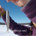 網走湖ワカサギ釣り2016解禁!今年も釣果は上々!